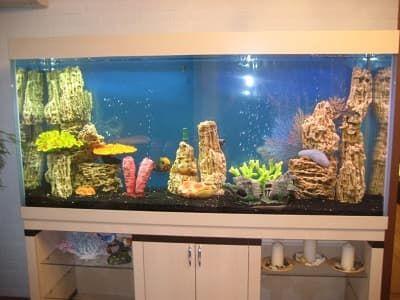 Псевдоморе в аквариуме