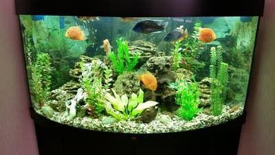 Аквариум с искусственными растениями