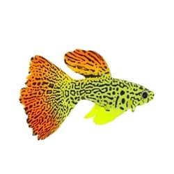 Флуорисцентная аквариумная декорация GLOXY Рыба гуппи на леске, 8х2,5х4,5см